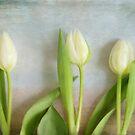 Tulips - JUSTART ©  by JUSTART