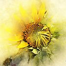 Sunny Sunflower  by Mark Salmon