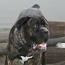 wild dog on the beach by memaggie