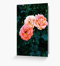 Three Roses in a Garden Greeting Card