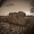 Winter Bales by Stuart  Milton