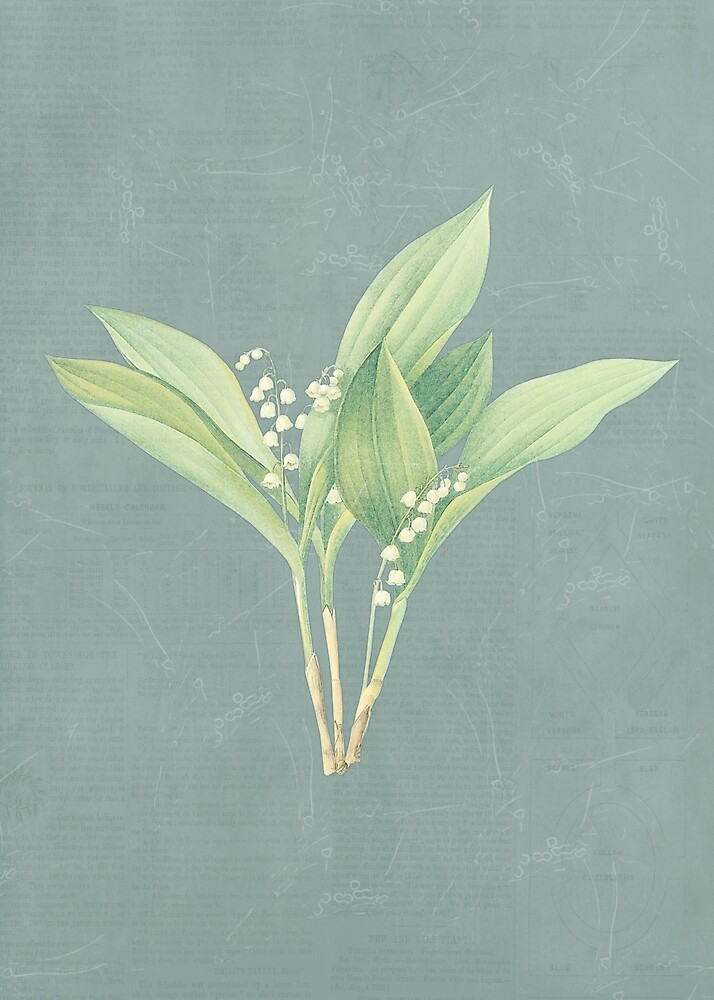 Lily of the valley by LifestyleAdv