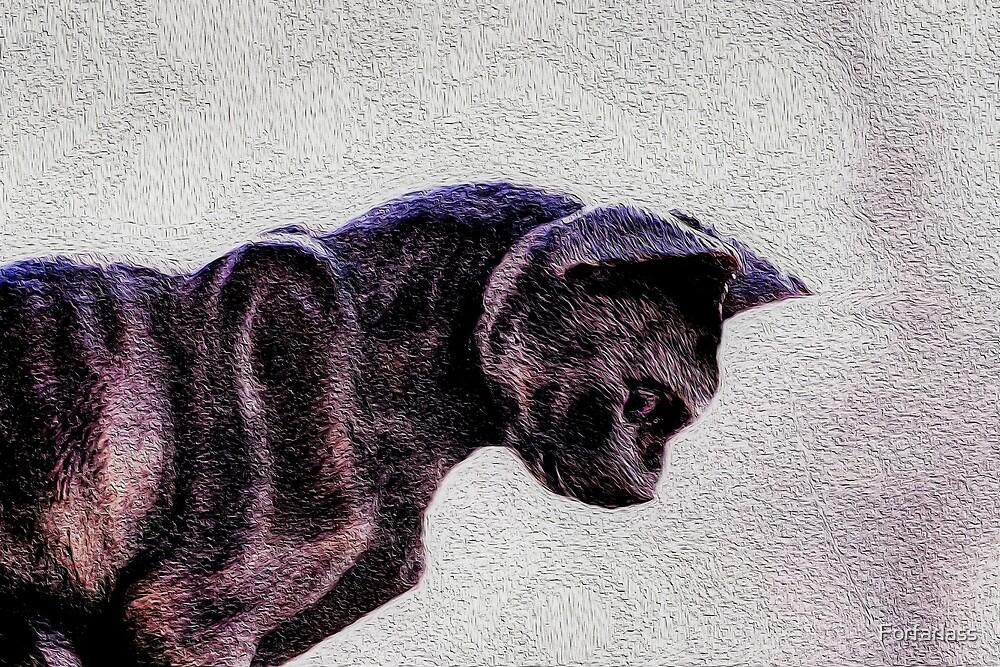 A Cat  by Forfarlass
