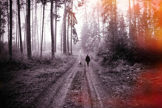 walking the dogs von Michael Hofmann