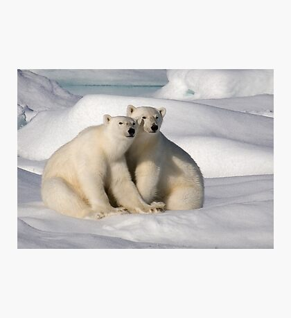 Polar Bear Brothers Photographic Print