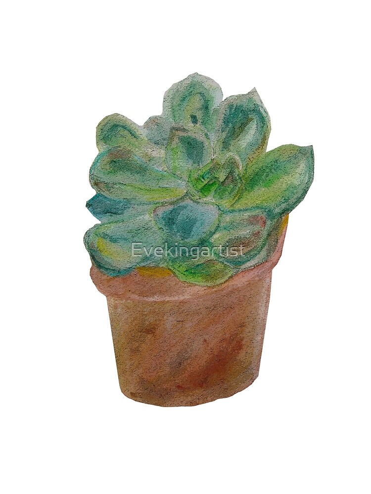Watercolour succulent by Eve King
