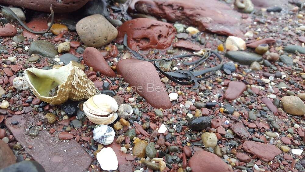 Stone&shells by Zoe Bevans