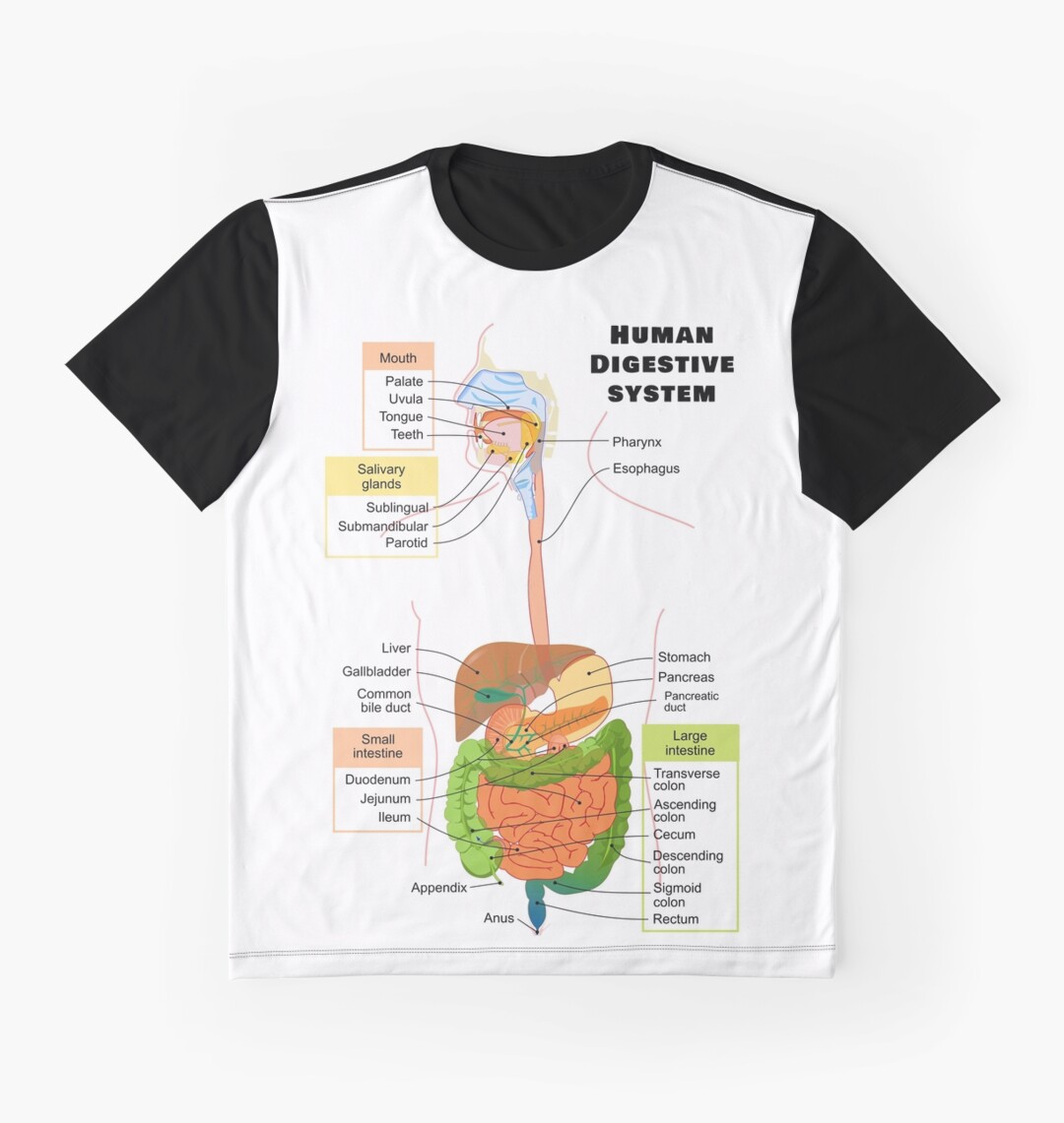 Lujoso Diagrama Del Sistema Digestivo Etiquetado Inspiración ...