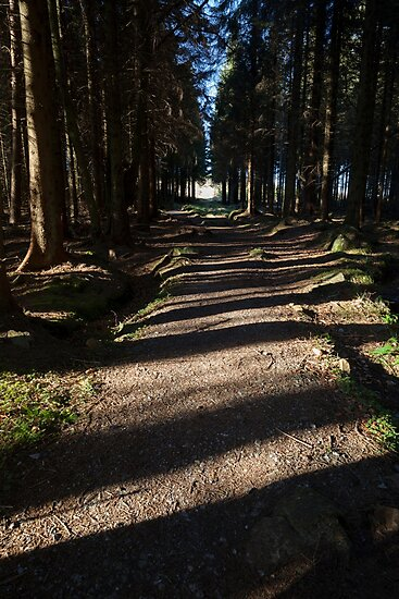 path through the bin forest by codaimages