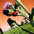 Sky Bug by TingyWende