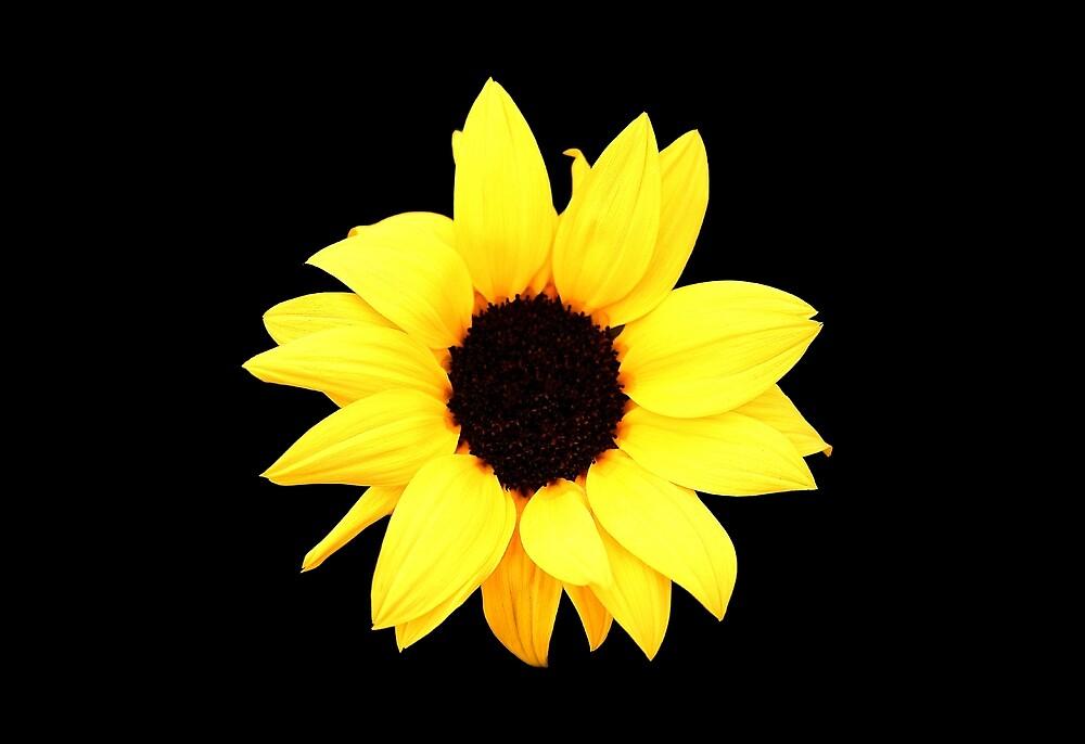 Sunflower by JuicyUS
