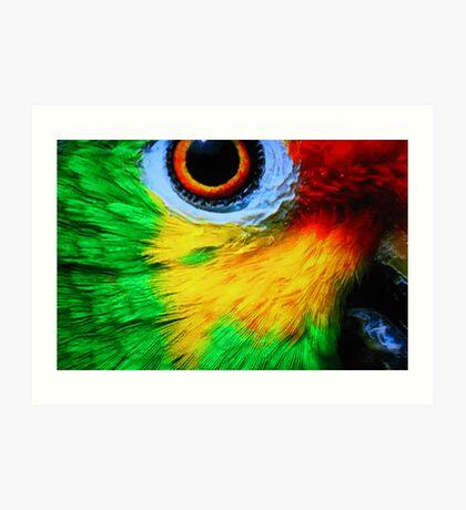 Caribbean Parrot Art Print