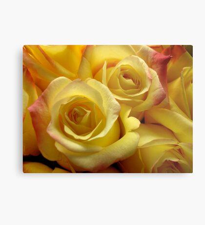 Blushing Yellow Roses Metal Print