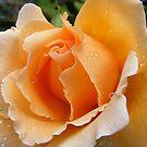 creamy rich butterscotch delight by gaylene