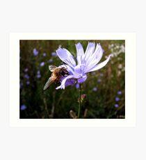 Nectar Hunting Art Print