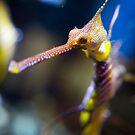 Sea Dragon by Chris Porteous