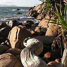 Fish Cove Driftwood by Reef Ecoimages