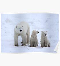 FAMILY PORTRAIT #2 - Polar Bears, Churchill, Canada Poster