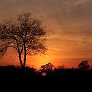 Sunset by TLWhite