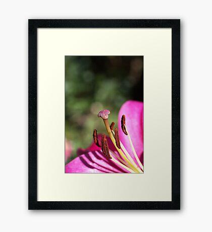 Lily Stigma and Stamens Framed Print