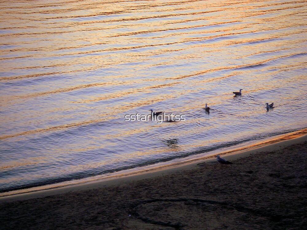 resting sea-gulls by sstarlightss