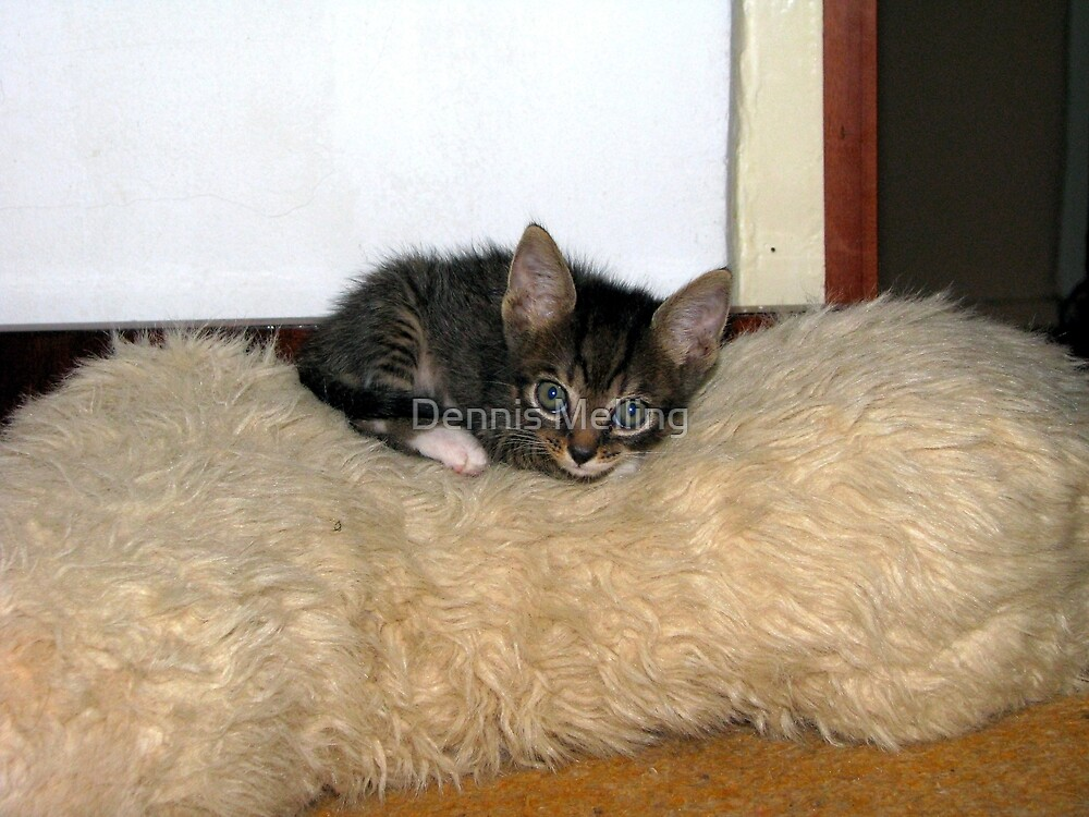 Mishu Finds a Warm Bed by Dennis Melling