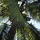 Tree in Mexico by Debbi Tannock