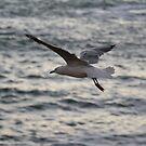 Coast Watch by Sprinkla