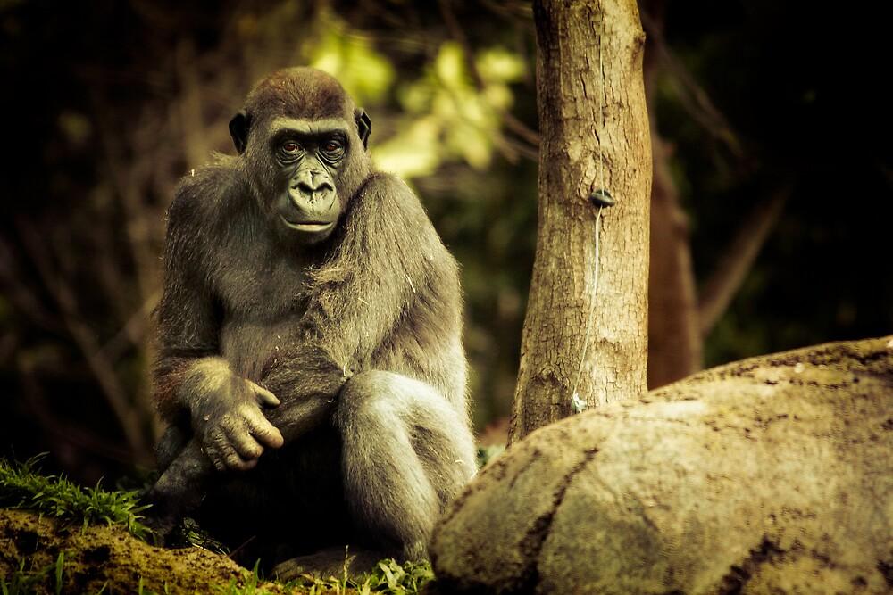 Gorilla by Natalie Manuel