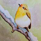 Robin by MadameCat-Art