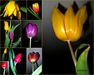 Tulip Time - Collage by naturelover