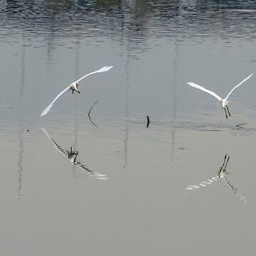 Water Ballet by MCHerdering