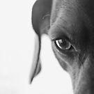 animal instinct by Angel Warda