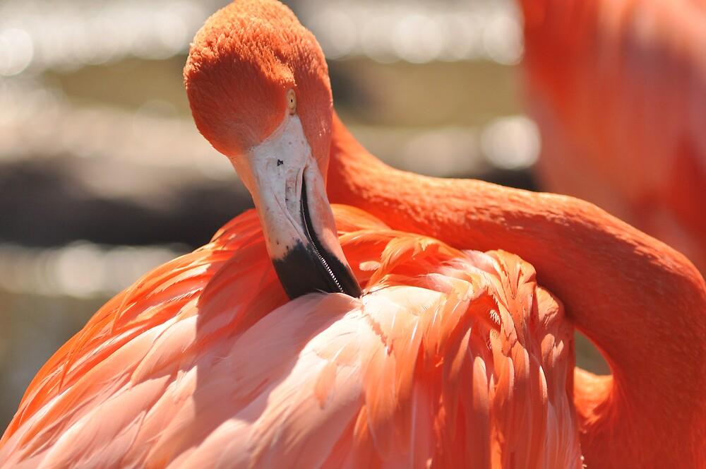 flamingo stylin by ALEX GRICHENKO