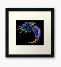 Cuckoo wasp Framed Print
