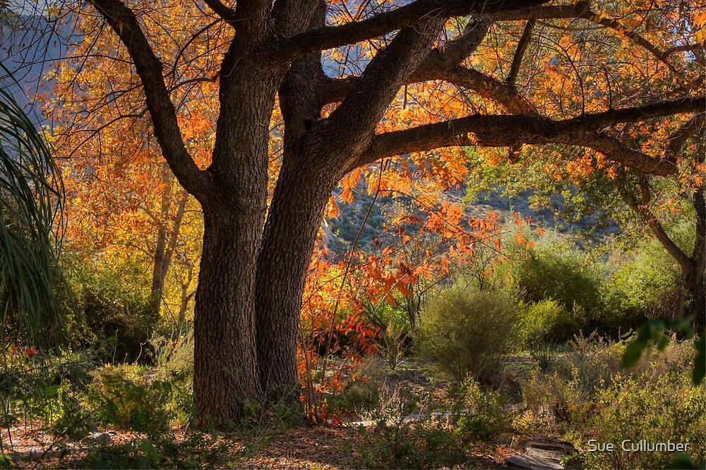 Autumn Memories by Sue  Cullumber