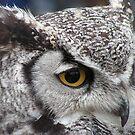 Eagle Owl by RichardWalk