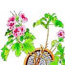 Pink Geraniums by marlene veronique holdsworth