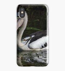 Australian Pelican (Pelecanus conspicillatus)  iPhone Case/Skin