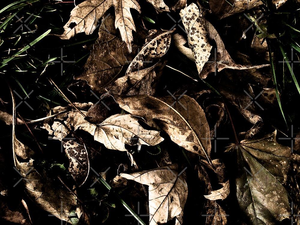 Dark Autumn by Areej Obeid