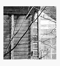 Linework Photographic Print