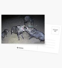 Javelina Harmony Postcards