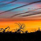 Sunset 102 by Richard Bozarth