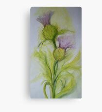 Highland thistle Water colour  Canvas Print
