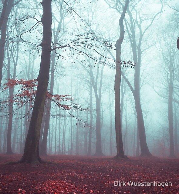 Solstice in Fog - Woodlands in Winter mist by Dirk Wuestenhagen