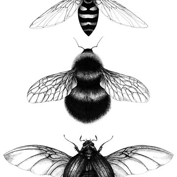 Insects illustration by linnw