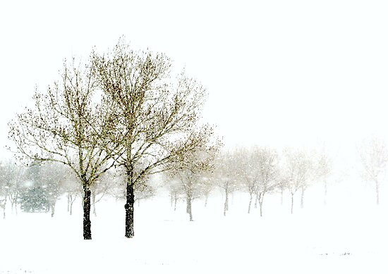 Spring Snowstorm by Phoenix-Appeal