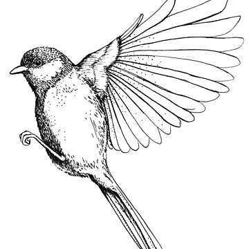 Spread your wings -  Flying Bird illustration by linnw