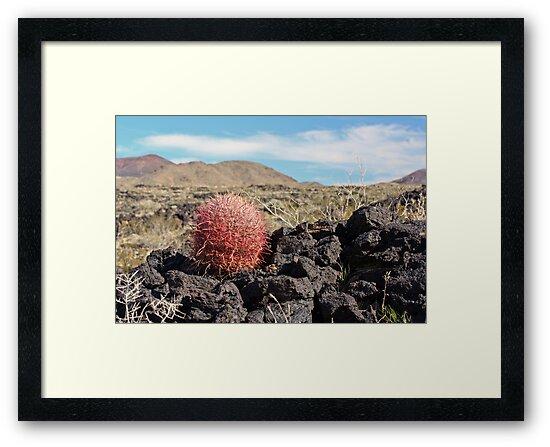 Ferocactus on lava by Chris Clarke