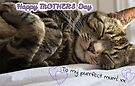Cute Sleeping Tabby Mother's Day Card by WiseKitty